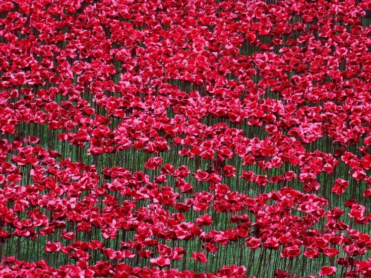 poppies-1475944_960_720